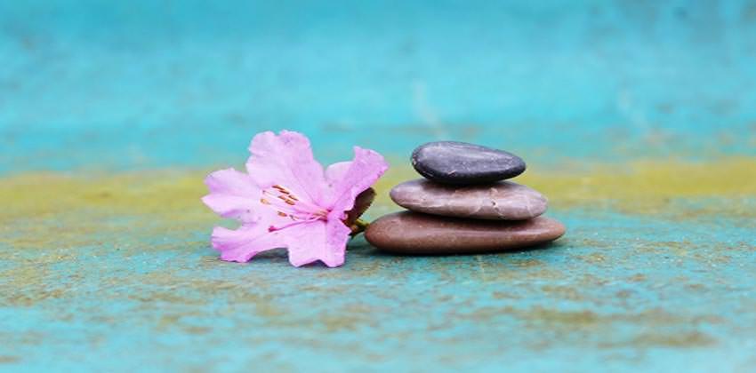 fiore-sassi-potenzialita-del-cervello-meditazione-inconscio-consapevolezza