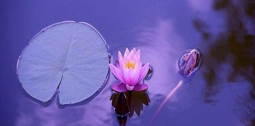 meditazione-e-mindfulness-tecniche-psicocorporee-3